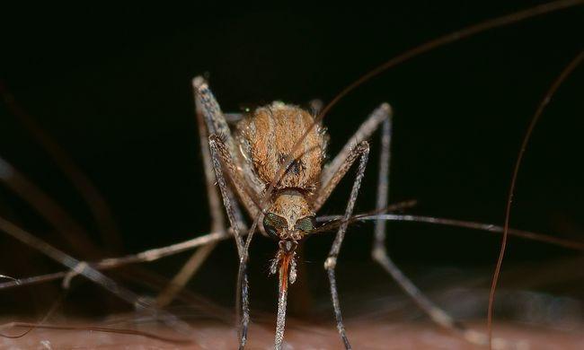 Jövő héten már az egész országban irtják a szúnyogokat