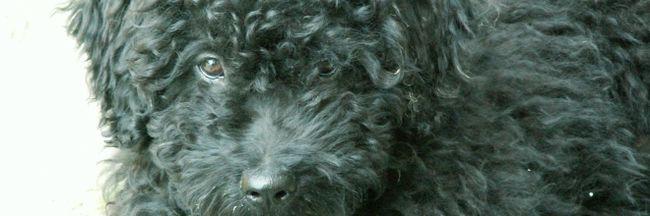 Így jutott haza Bogi, a Horvátországig kóborolt kutya