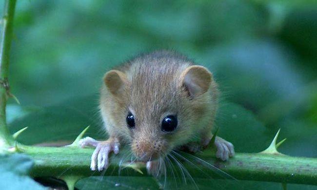 Ez az első faj, amely a klímaváltozás miatt halt ki