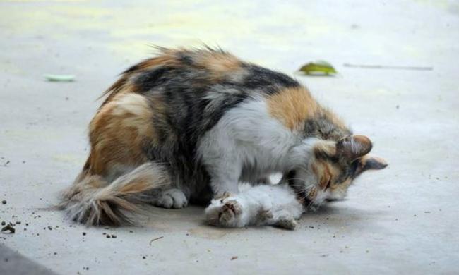 Ragasztóval öltek meg egy macskát Budapesten
