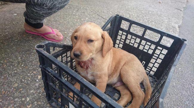 Pengével vagdosták össze a kutyakölyök nyakát