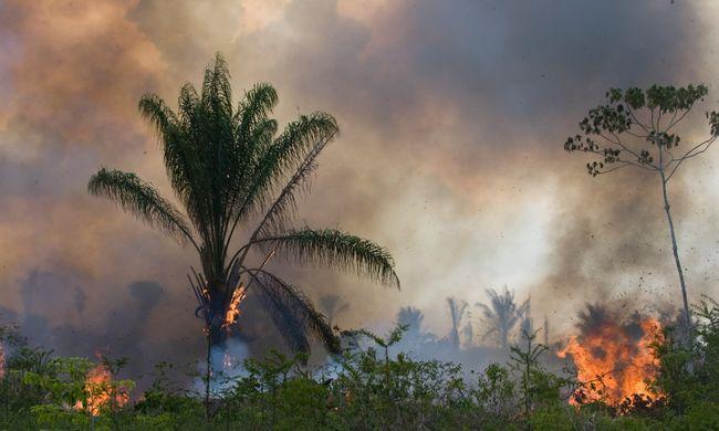 Életveszélyes környezetvédőnek lenni - tavaly 185 aktivistát gyilkoltak meg
