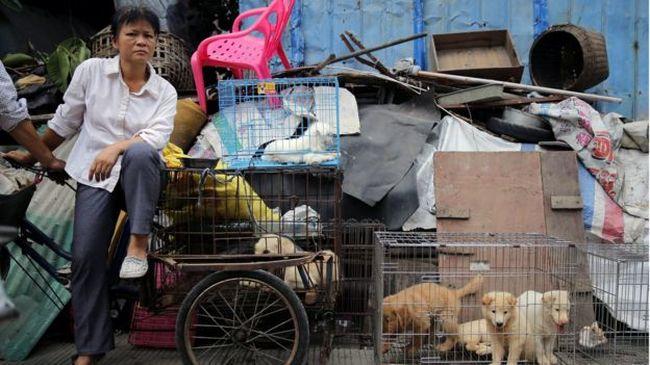 Milliók tiltakoznak: ezrével ölik a kutyákat a fesztiválon