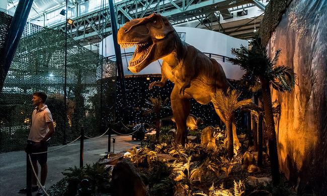 Méretes dinoszaurusz totyogott a zebrán - videó