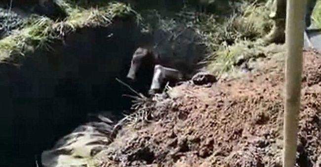 Sokkoló videó: élve temették el a katonát
