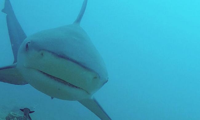 Cápa támadt a fiatal orvosra, hihetetlen módon menekült meg