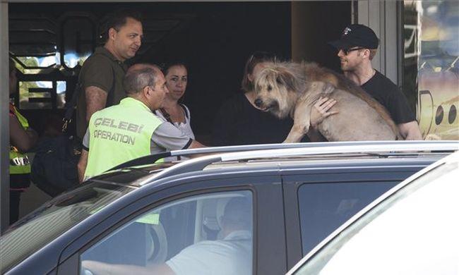 Megérkezett Budapestre Ryan Gosling, forog a Szárnyas fejvadász