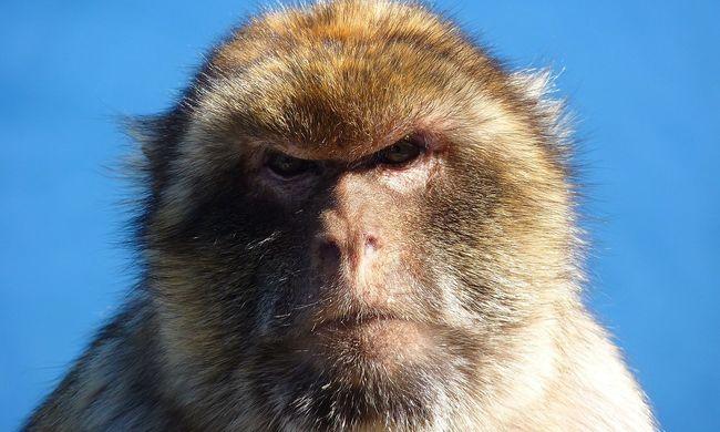 """""""Szórakozásból"""" lökött vízbe egy majmot a turista, de nagyon ráfázott - videó"""