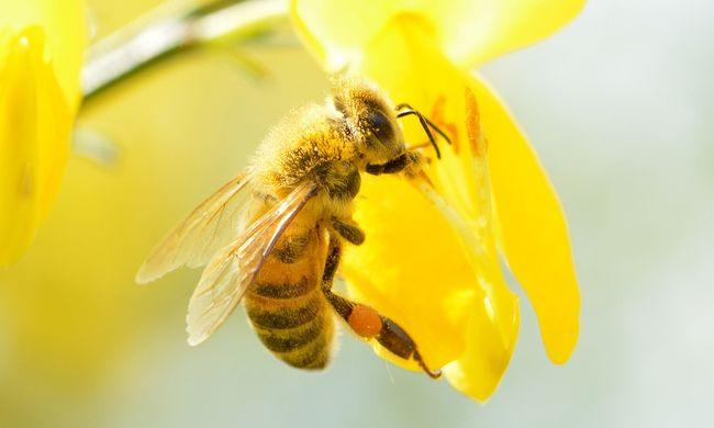 Méhek okoztak hatalmas dugót a fővárosban