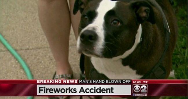 Egy leszakadt kézzel a szájában jött vissza a kutya