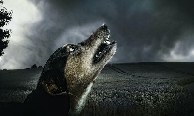 Szelfizni akart a kutyával, az állat szétmarta a nyakát