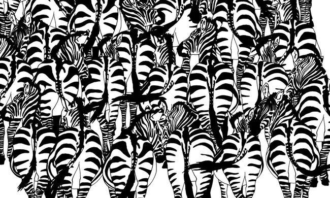 Újabb képrejtvény okoz fejtörést az interneten - Ön megtalálja a borzot a zebrák közt?