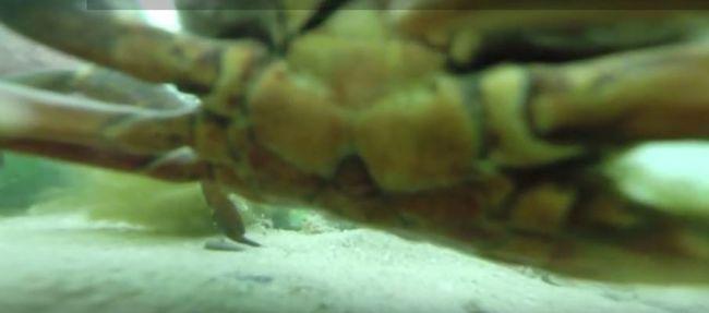 Kamerát fogott az óceánból, felvette a vízalatti történéseket - videó