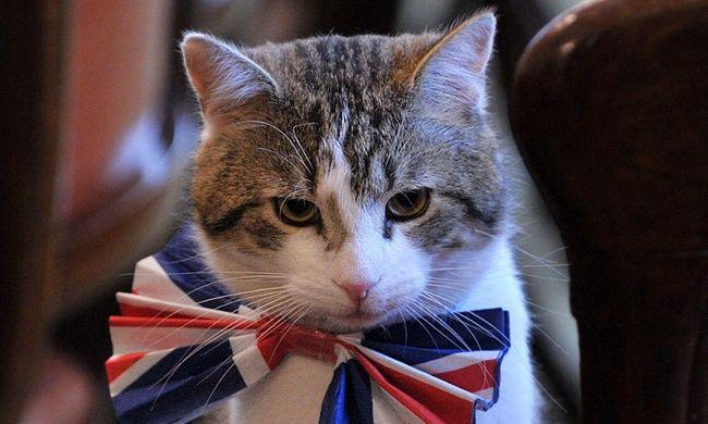 Cameron költözik, de a macska marad