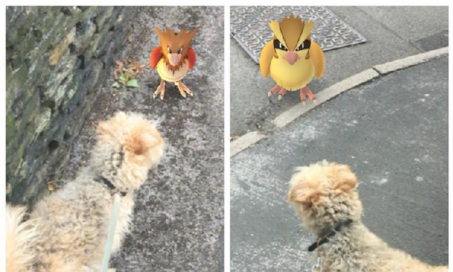 A Pokémon Go menti meg a menhelyi kutyákat