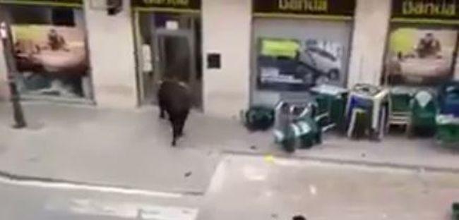 Bankba menekült a bika - videó