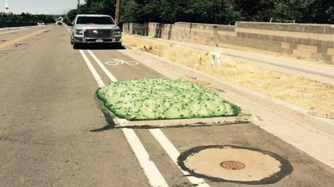 Zöld hab burjánzott elő a csatornából