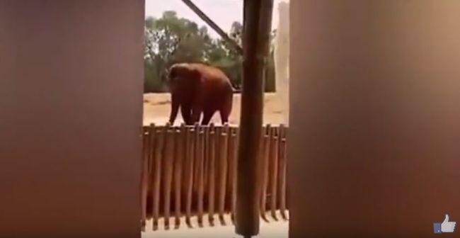 Követ vágott a 7 éves kislányhoz az elefánt, meghalt - videó