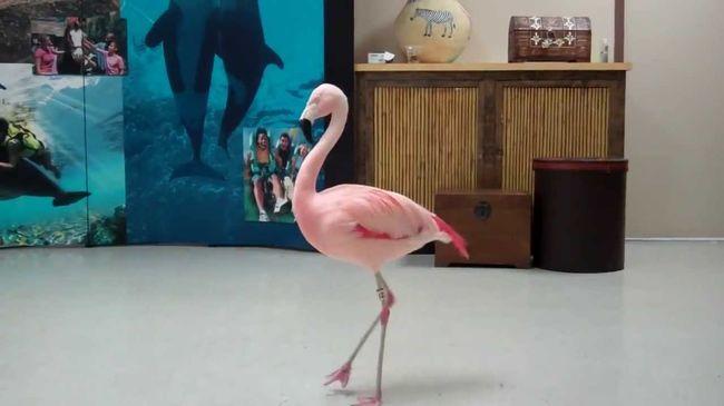 Megőrült a férfi, földhöz vágta a flamingót