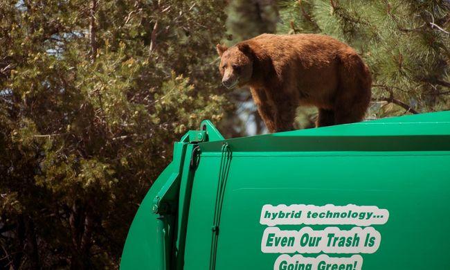 Kukásautón utazó medve az internet új sztárja