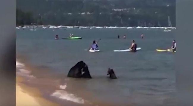 Velük még biztos sosem strandolt - videó
