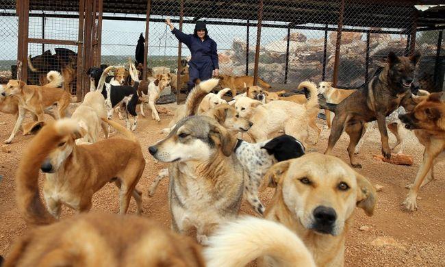 Állatmenhelyet gyújtottak fel - 120 kutya pusztult el