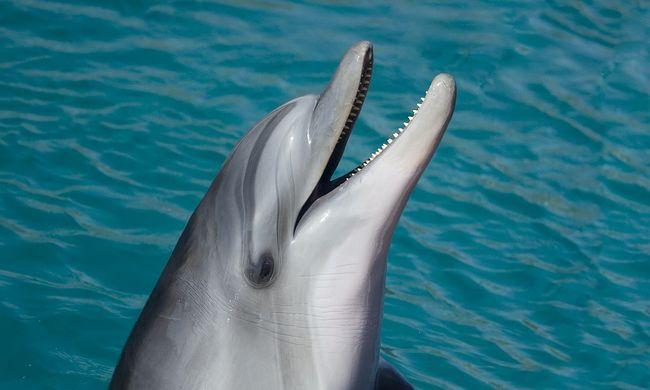 Dörgölőző delfin miatt tiltották be a strandolást ebben a városban