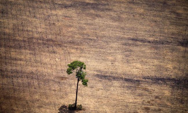Tartalék üzemmódra váltott a Föld, idén is túl mohók voltunk