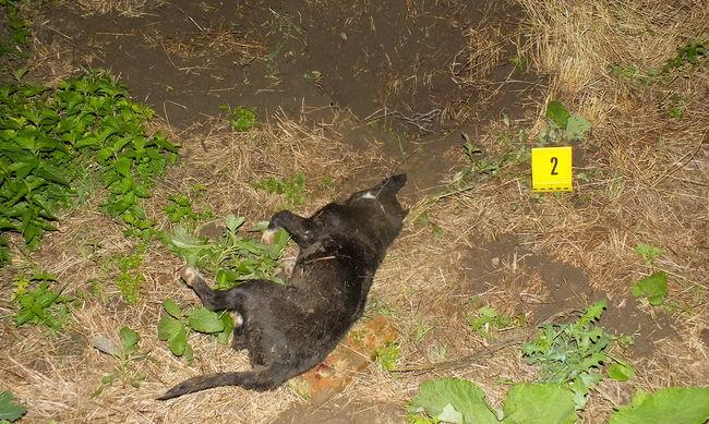 Csapdába ejtette, és kivégezte a kutyákat az állatkínzó