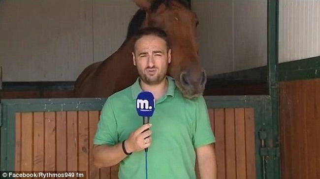 A riporter bejelentkezett volna, de a ló folyamatosan nyalogatta - videó