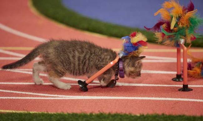 Ilyen lenne az olimpia, ha macskák versenyeznének - videó