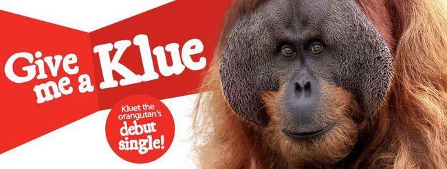 Új sztár a zeneiparban: saját lemezt adott ki egy orangután