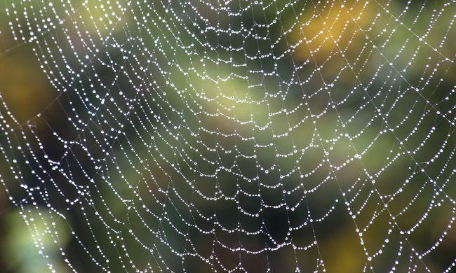 Egyre több gyerek kerül kórházba a különös pókok csípése miatt