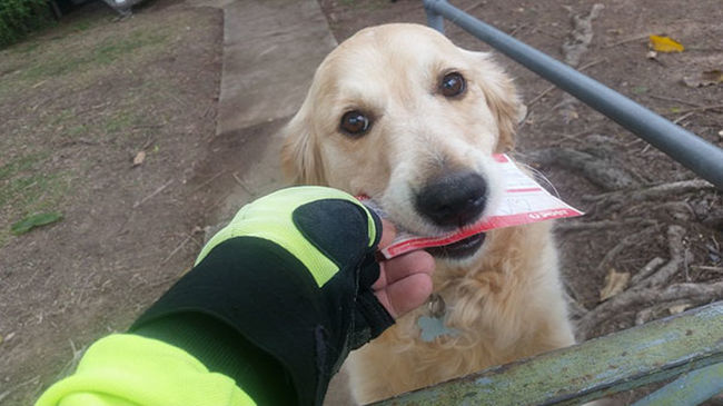 Leveleket ír a kutyának a postás, hogy felvidítsa