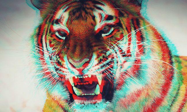 Tigris szabadult New York utcáira, valami nagyon különös derült ki róla