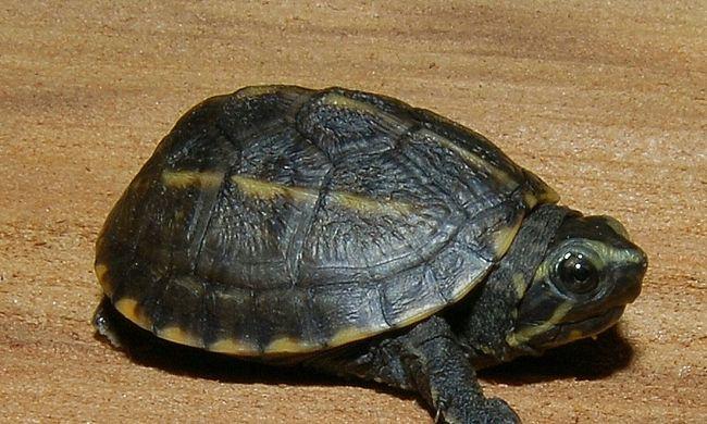 Kisfiú lopta el a teknőst az állatkertből
