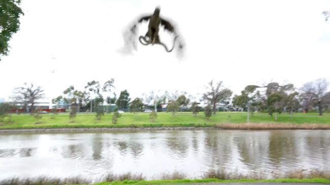 Kígyót dobott a héja a grillező család közé - videó