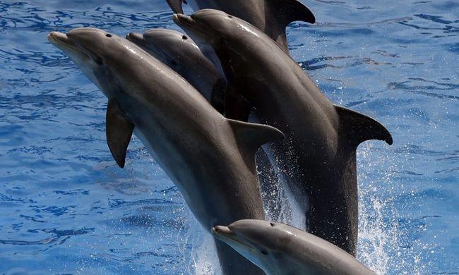 Mérgezés miatt kerültek veszélybe a delfinek