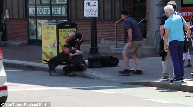 Így marcangolta a pitbull a beaglet a nyílt utcán - videó