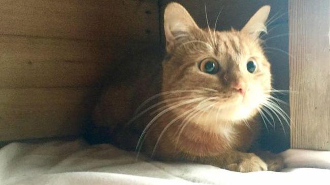 Száz kilométert utazott a motortérbe szorulva a macska