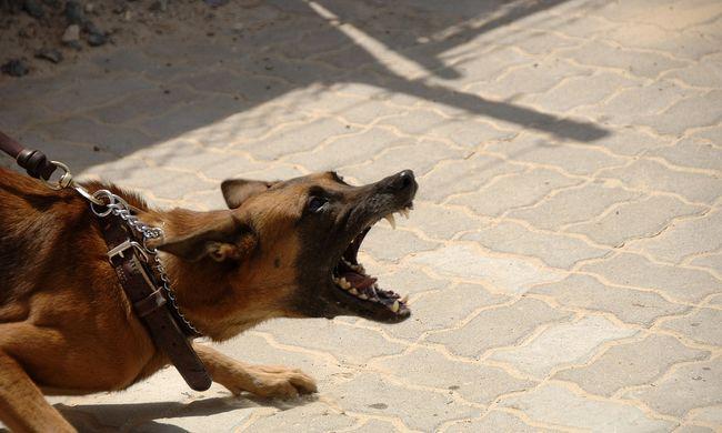 Ijesztő támadás: több embert is súlyosan megsebesítettek a kiszabadult kutyák