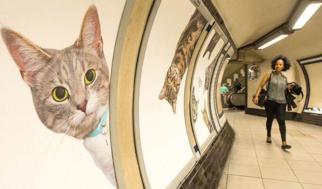Itt eltűntek a reklámok és macskák kerültek a helyükre - videó