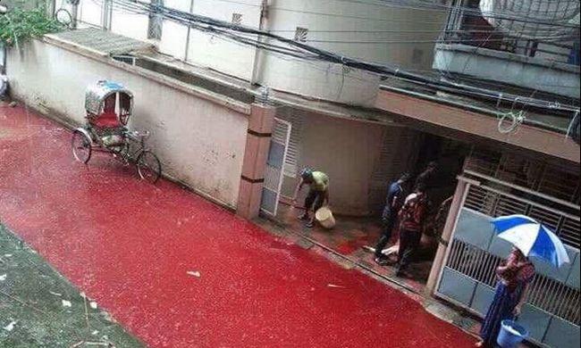Vérfolyó hömpölyög az utcákon - több ezer állatot vágtak le