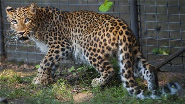 Fajfenntartó szerelemnek adhat otthont a debreceni állatkert