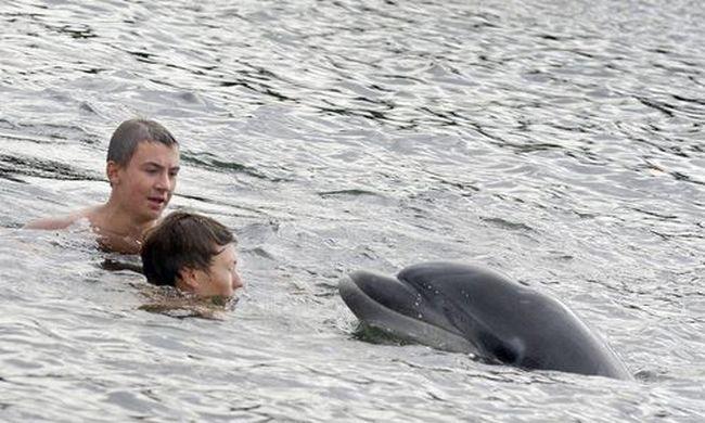 Gyerekek ölelgetik az eltévedt delfint