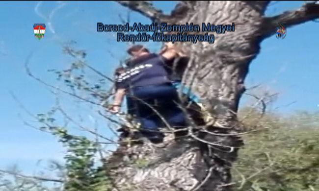 Megijedt egy vaddisznótól a magyar fiú - úgy kellett leszedni a fáról - videó