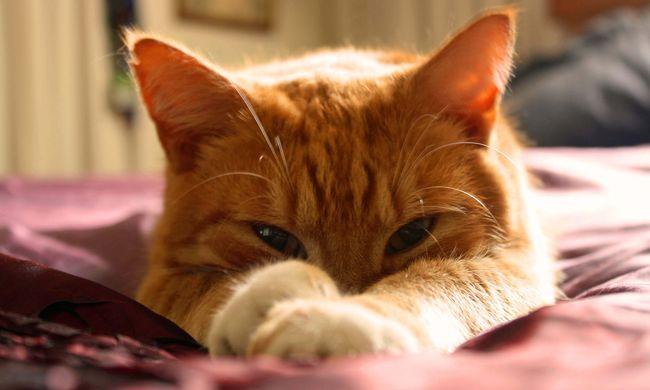 A híres színésznő saját pisijével csalogatta haza elveszett macskáját