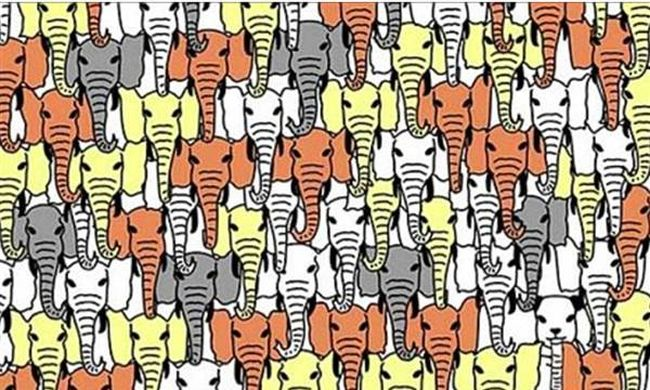 Izzasztó képrejtvény: megtalálja az elefántok között rejtőző pandát?
