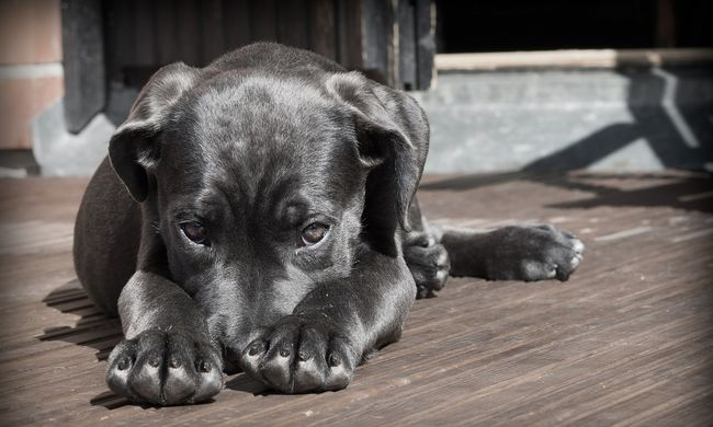 Borzasztó: az elpusztult állatok szaga miatt bukott le az állatkínzó