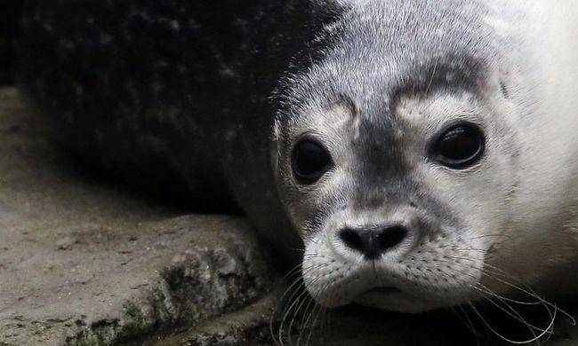 Állatokat képeztek ki lövöldözésre, így tart célra a két alaposan felkészült emlős - videó